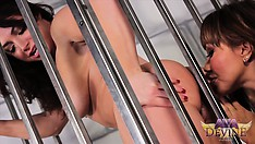 Her mistress lets her out of the cage to play with her strap-on